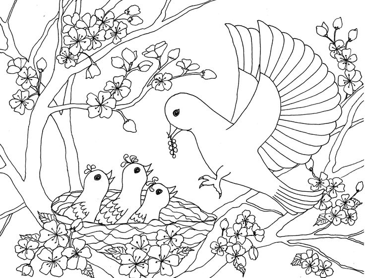 56 best Coloring Pages for Grown Ups Animals images on Pinterest