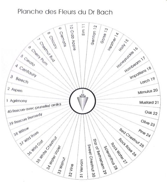 Planche fleurs de Bach 1