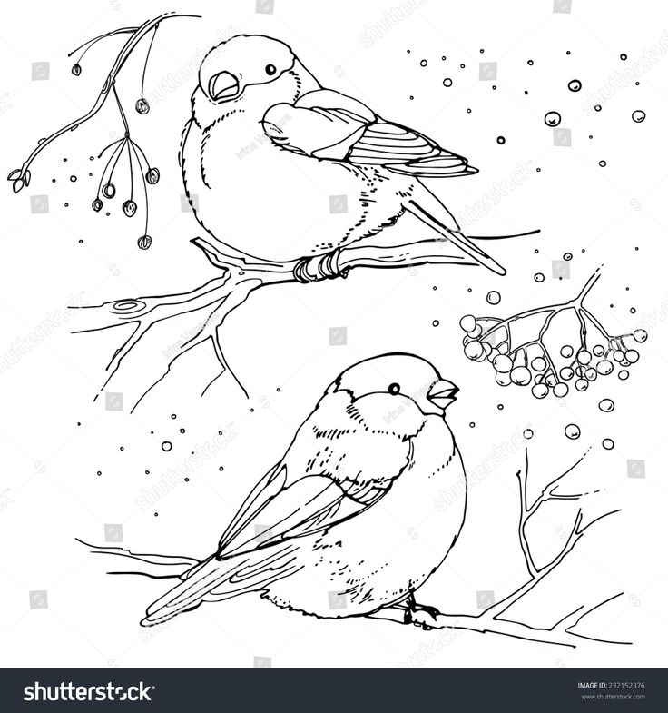 Set Of Birds Drawn Line Vector Illustration Winter Coloring