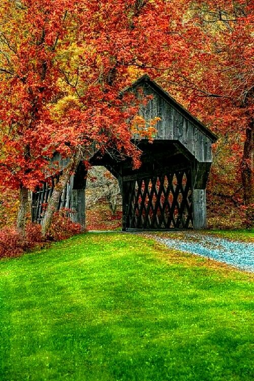 Covered bridge in fall New England