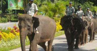 Bali Zoo Exclusive short trek Elephant Ride Expedition