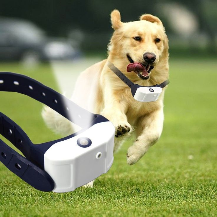 Rechargeable Citronella Spray Dog Training Collar...FREE SHIPPING...