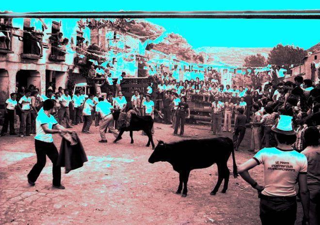 Vaquilla en La Hoz de la Vieja (Teruel) España