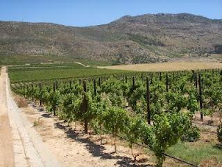 Constantia winelands, Steenberg wine estate