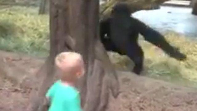 Gorila y niño juegan a las escondidas en zoológico de Ohio