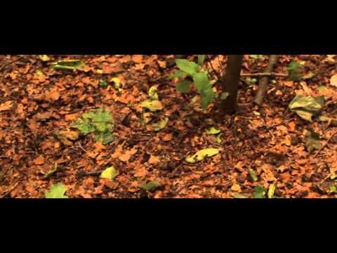 hidden woods - A Poem by Hollie McNish - www.hiddenwoods.co.uk - YouTube