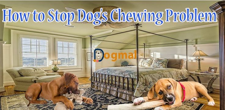 how to stop dogs chewing problem