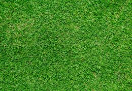 Bermuda grass is one of those grass varieties that have extensive growth and so is popularly found on lawns, parks, sports fields (especially golf courses) and pastures. Though it becomes dormant in winter, it has the ability of 'coming back from the dead' once the temperature rises. The methods and tips outlined here will help you know methods for growing Bermuda grass.
