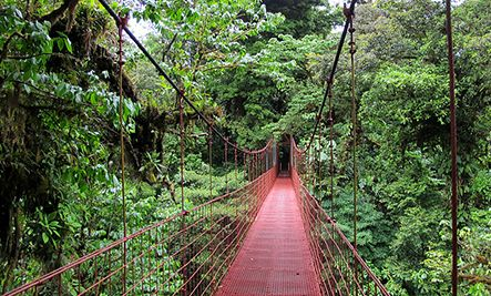 Monteverde Cloud Forest, Costa Rica    This stunning rainforest is home to more species of orchid than anywhere else on the planet. And that's not all: you'll find 500 species of butterflies, 400 different kinds of birds, and over 100 different types of mammals. The forest is almost entirely old-growth.