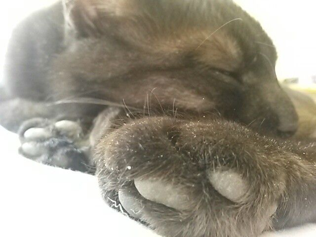 My paws