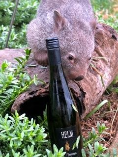 Wombat and a winebottle