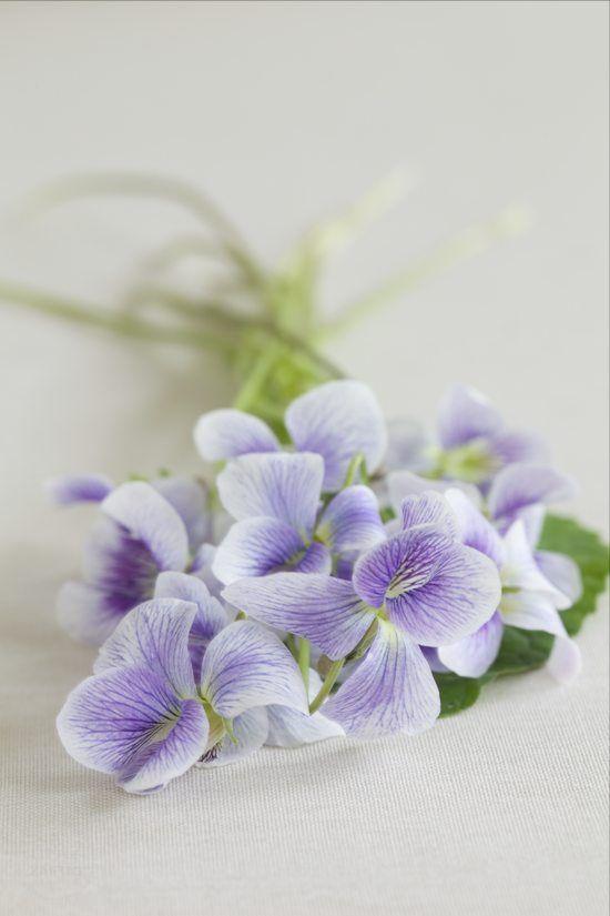 Healing Violets
