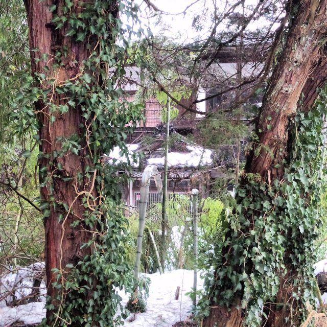 【yuuyami0703】さんのInstagramの写真をピンしています。《大沢峠麓の廃病院、林から覗く入り口玄関。  #坂内病院  #院長の邸  #廃墟  #大沢峠  #心霊スポット  #ホスピタル  #竹藪  #林  #SECOM  #井戸  #池  #川  #雪》