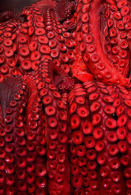 """""""suckers"""", photo of octopus, by Egon van Engelen"""