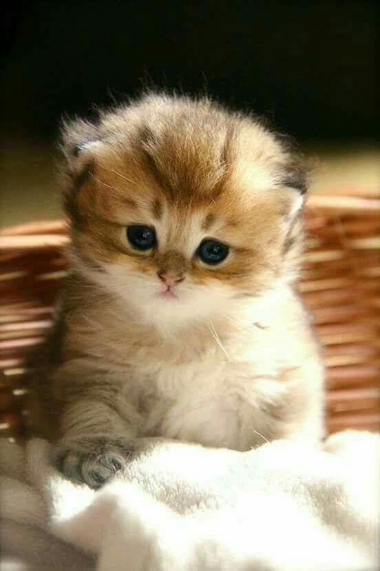 So Cute.. I love