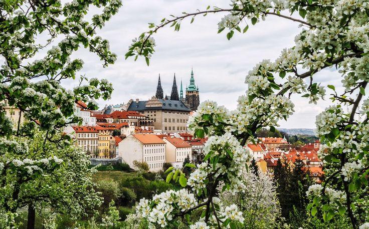 Весна в Праге, Martin Lukač. Ловите мгновения на Яндекс.Картинках.