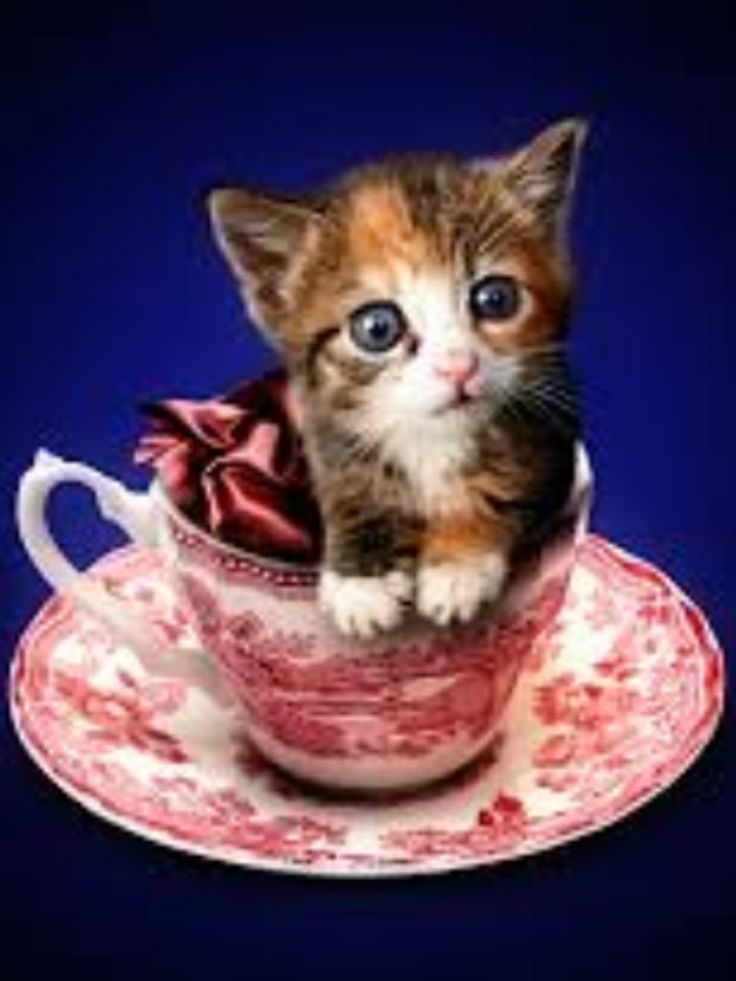 Cups Puppies Kittens Animales Cute Mugs Kitty Cats Puppys Baby