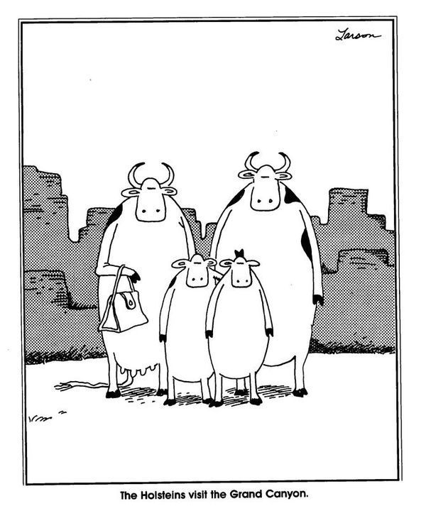 Image result for the far side cow