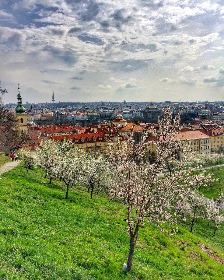"""1,046 Likes, 14 Comments - Прага (@best_in_prague) on Instagram: """"Доброе утро! Пора цветения в Праге набирает обороты! Вчера во время прогулки были обследованы…"""""""