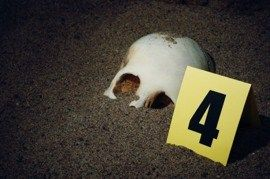 How to Become a Forensic Anthropologist: Career and Salary Information #average #salary #for #forensic #psychologist http://north-carolina.nef2.com/how-to-become-a-forensic-anthropologist-career-and-salary-information-average-salary-for-forensic-psychologist/  # Forensic Anthropologist: Career Guide The primary task of a forensic anthropologist is to gather and interpret evidence to assist in the identification of human remains and determine the cause of death. Therefore, forensic…