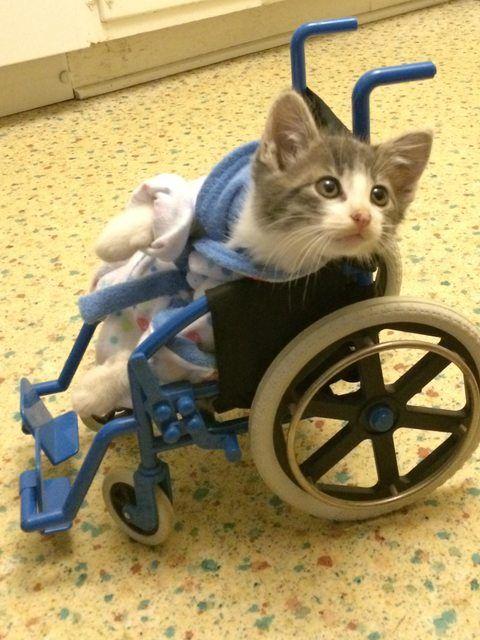 My kitten just got back from the vet