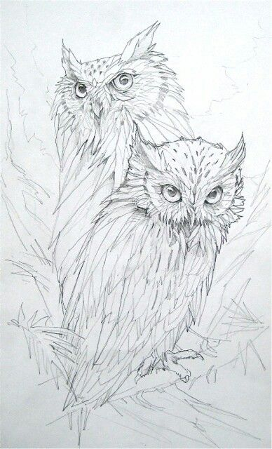 I'd like to be able to draw an owl like this!