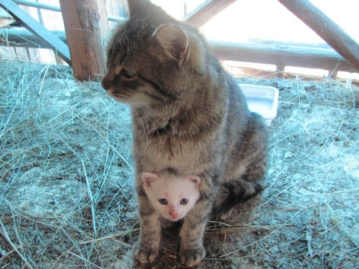 ꒰⌯͒•·̫•⌯͒꒱  #cat #kitty: Mothers Love, Kitty Cat, Kangaroos, Baby Kittens, Big Brother, Peekaboo, Peek A Boo, Mommy Time, Animal