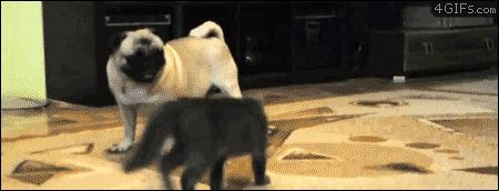 32 Gifs Of Cats Who Forgot How To Cat - Gallery
