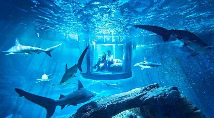 Su altında köpek balıklarıyla uyuyacağınız bir oda - Aquarium de Paris
