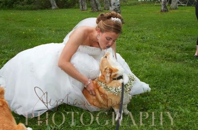 The Daily Corgi: With This Corgi, I Thee Wed: Jaclyn  Joe!