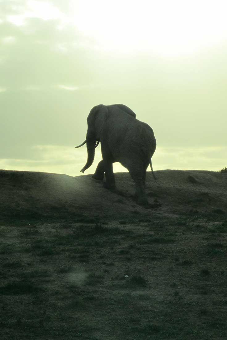 Addo Elephant Park - South Africa