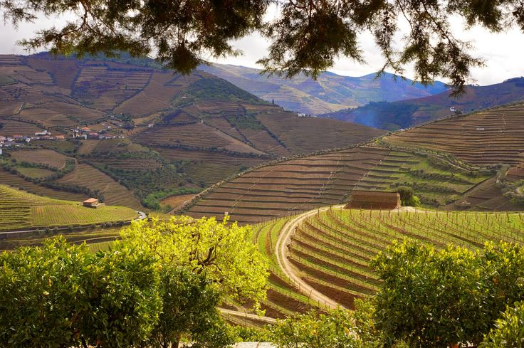 Douro - Vinicola.