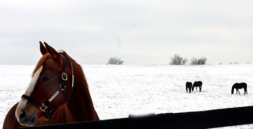 Winter wonderland.Horses, Horseless Equestrian