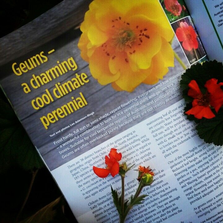 """Our Garden"" Magazine #62 feature article on lovely Geum"