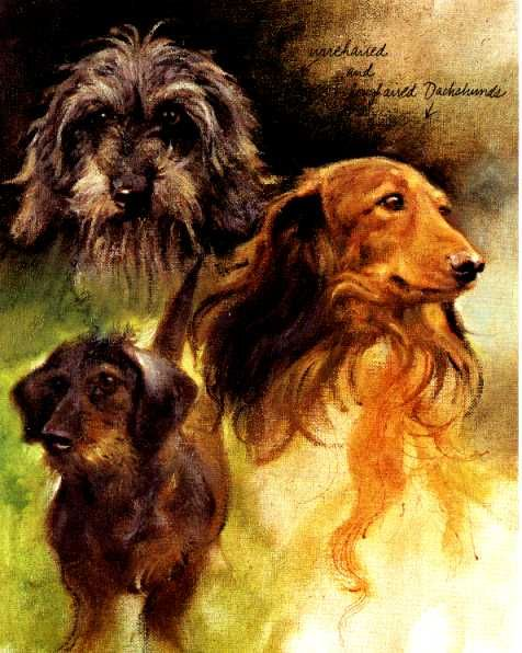 Image detail for -Dachshund Vintage Dog art prints, Gifts and Artwork from DogsOnTheNet ...