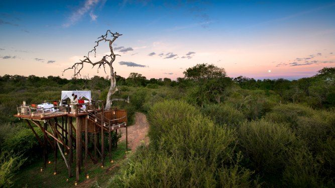 Chalkley Treehouse, Lion Sands - SOUTH AFRICA. The Chalkley Treehouse is perfect for couples, and your evening picnic basket consists of tapas-style delicacies and an excellent bottle of South African red wine.