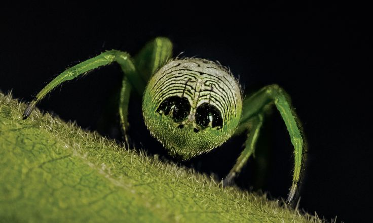Close encounters of the furred kind: alien butt spider and friends – in pictures