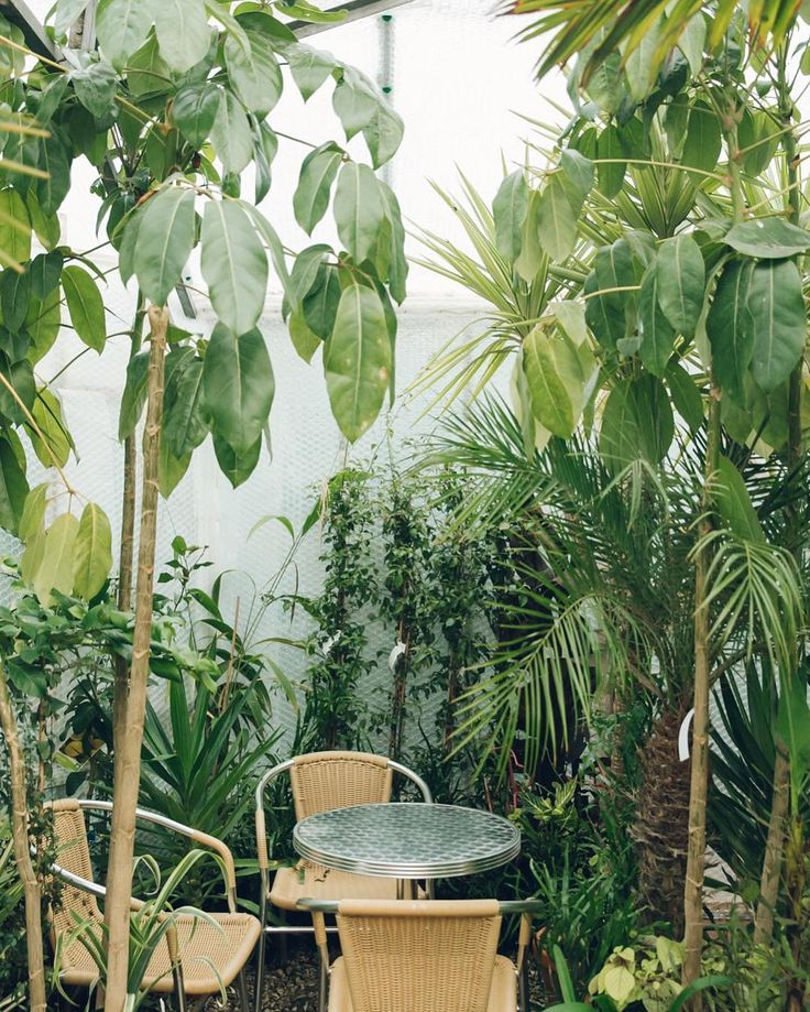 1000 ideas about balcony plants on pinterest patio for Plants for small apartment balcony