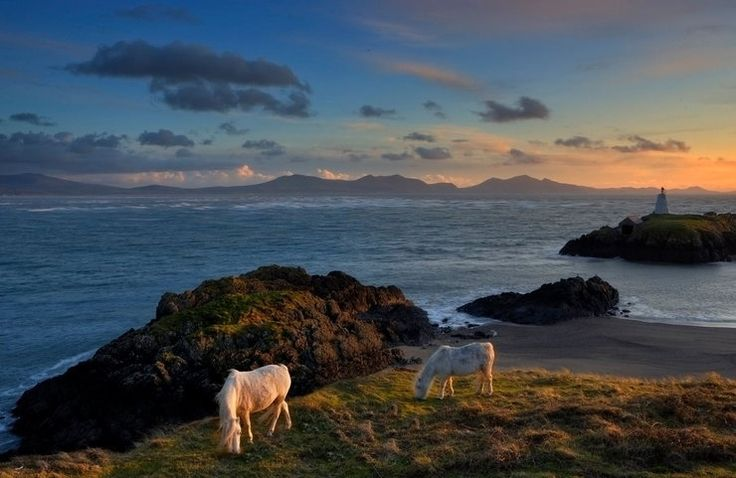 Piękne zdjęcia morza w konkursie fotograficznym Shipwrecked Mariners' Society. Kategoria Wybrzeże - Kucyki w Llanddwyn, Rory Trappe