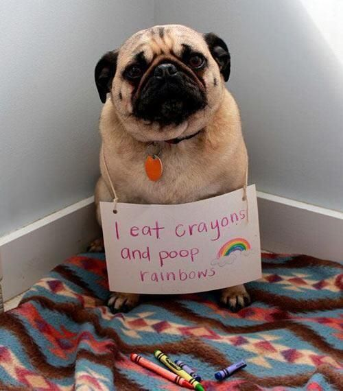 The Elusive Crayons via twitter #Pug
