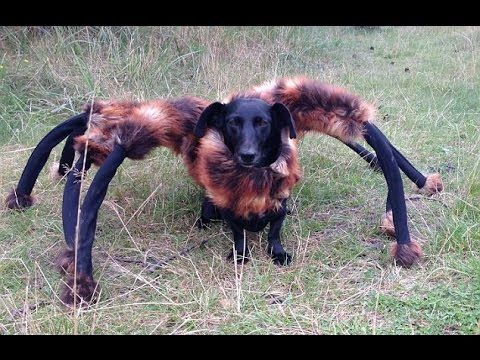 Chica the Spider-Dog Scares People in Hilarious Prank!!Watch This Amazing Video Today | Watch This Amazing Video Today