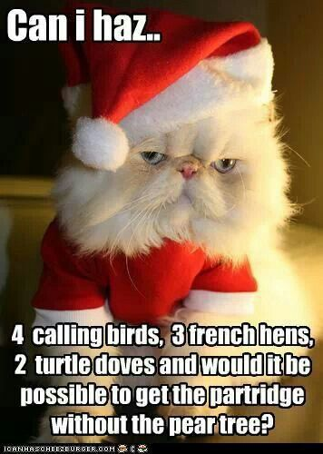 Funny.  Christmas Cat ordering from the menu...