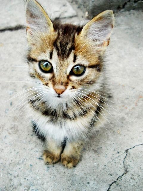 Oh this guy is too beautiful! via @EmrgencyKittens
