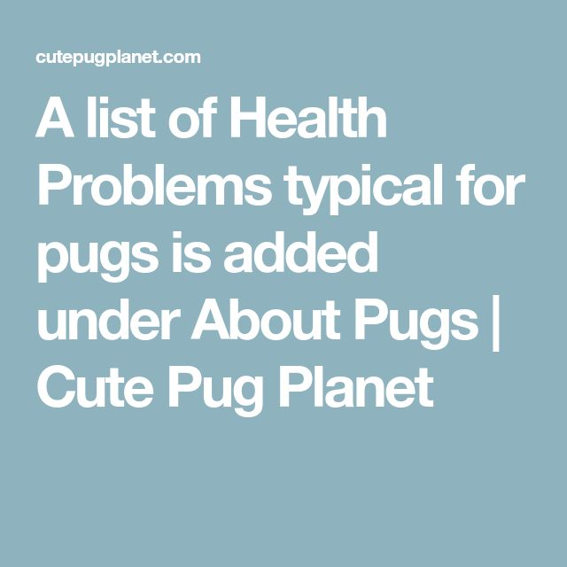 A list of Health Problems typical for pugs is added under About Pugs   Cute Pug Planet