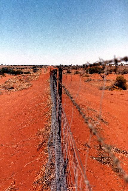The dog fence between New South Wales and South Australia.