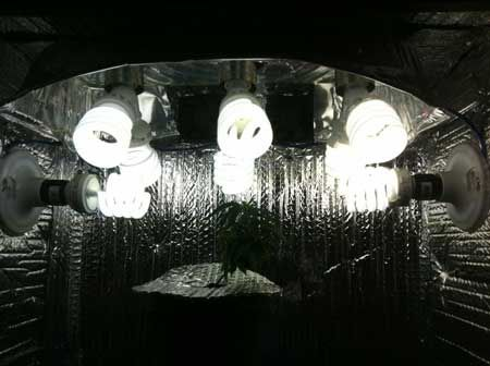 vegetative grow lights used for marijuana microgrow these cheap grow lights. Black Bedroom Furniture Sets. Home Design Ideas