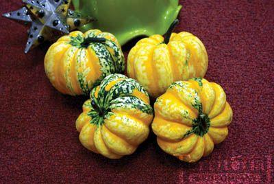 75 Best Squash Pumpkins Seed Varieties Images On 400 x 300