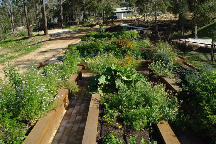 The Aravina kitchen garden looks so lush and delicious, wonder what the kitchen team will do with all these amazing vegetables?