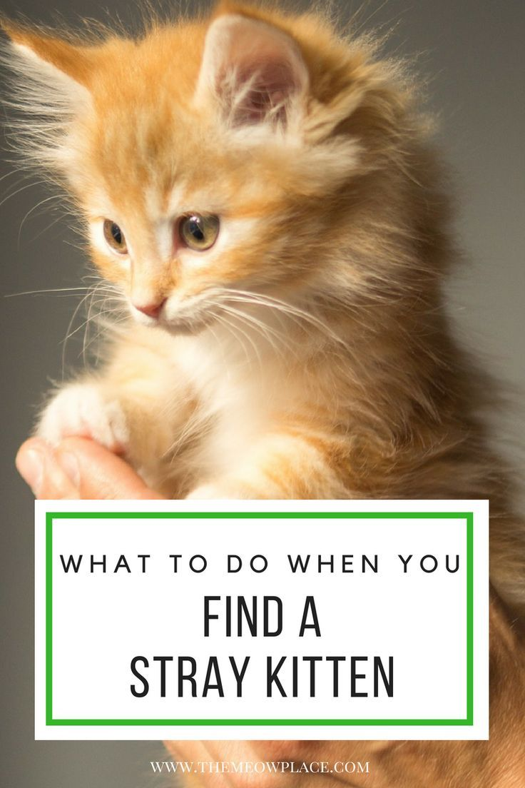 What To Do When You Find A Stray Kitten The Meow Place Cat Care Sick Cat Cats