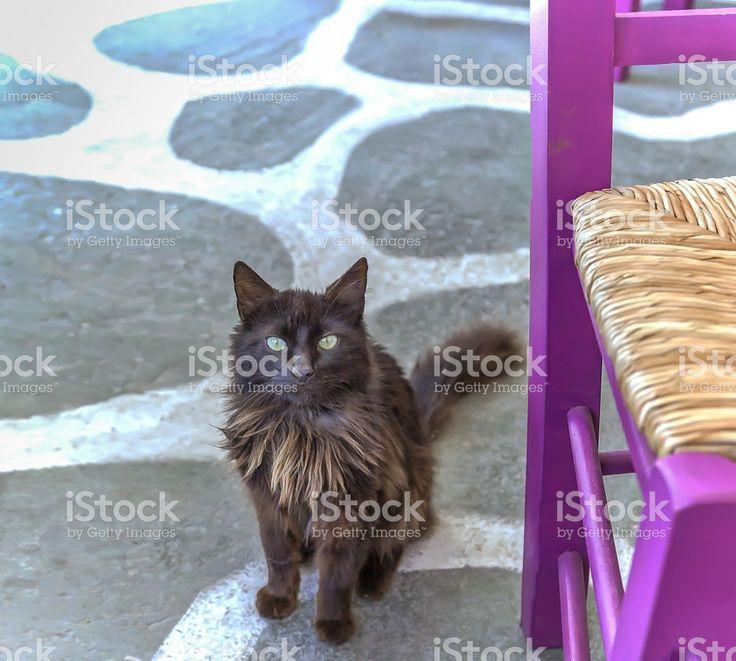 Village Cat royalty-free stock photo